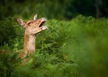 Deer In Wild Forest