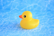 Rubber Duck In Water Background. Studio Photograph.