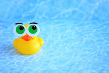 Rubber Duck With Funny Eyes An...