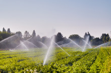 Irrigation System In Function,...