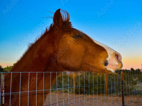 Happy horse c2020Rachelle