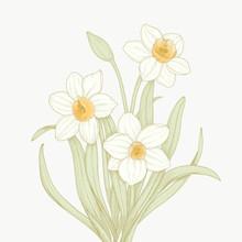 Vector Daffodil Vintage Detail...