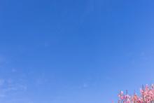清々しい春 大空と梅と