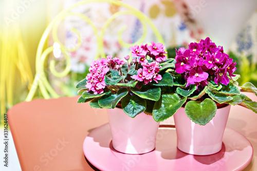Obraz Violets in flower pots - fototapety do salonu