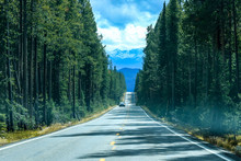 Road Way In The Forest  Of Yel...