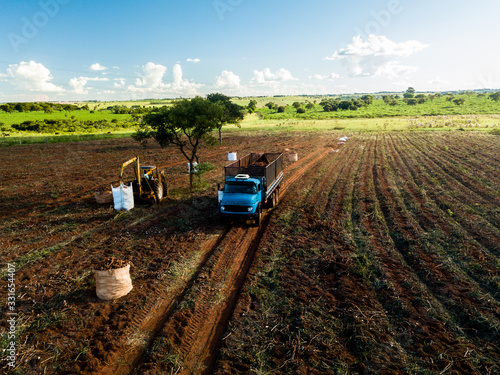 Photo Aerial view of the cassava harvest in Mato Grosso do Sul, Brazil
