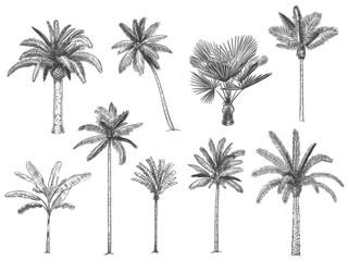 Ručno nacrtane tropske palme. Vektorski set havajskih plaža na palmi, paprati i listovima, kontura, botanička flora, tropska ilustracija