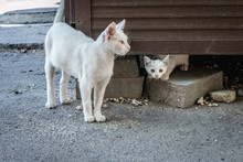 Two White Stray Cats In Chisinau City, Moldova