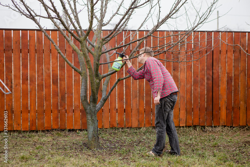Fotografiet Pesticide treatment, pest control, insect extermination on fruit trees in the ga