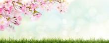 Pink Cherry Tree Blossom Flowers Blooming Above A Green Grass Meadow On A Spring Easter Sunny Day Banner Background.