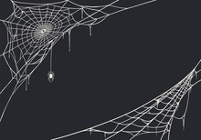 Spider Web For Cards And Backg...