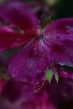 Drops In Flower