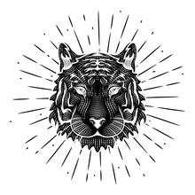 Tiger Head. Vector Illustratio...