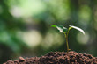 Close-up young plant growing in the soil concept save nature or agriculture on soft green tree background.