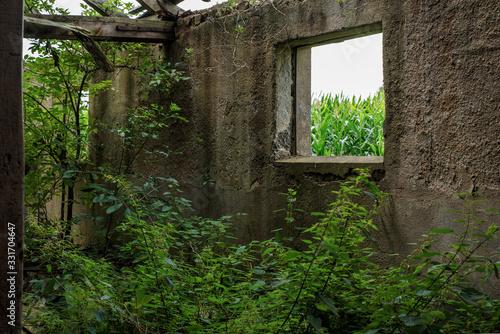 Ruine, Alt, Haus, heruntergekommen, Stall, lost place Wallpaper Mural