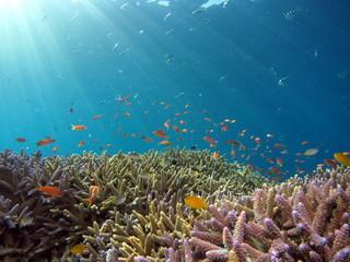 Fototapeta na wymiar 美しいサンゴとカラフルな魚