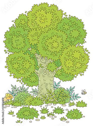 Vászonkép Big branchy oak tree, green bushes, grass and mushrooms on a pretty forest glade