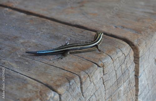 reptil de colores posado sobre una madera Wallpaper Mural