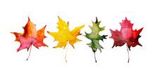 Autumn Maple Leaves, Set Of Elements For Design, Watercolor Illustration.