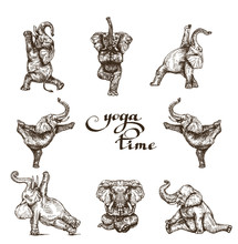 Elephants Gymnastics Yoga Time Set Of Different Poses Style Engraving Sketch Vector