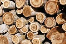 Cut Poplar Trees, Timber Trade...