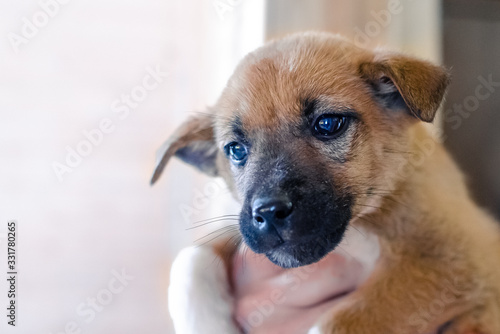 Foto Portrait of mongrel, crossbred brown puppy with sad look supported by male hand