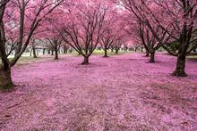 Pink Land!