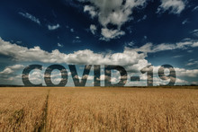 Wheat Ears And Cloudy Sky With...