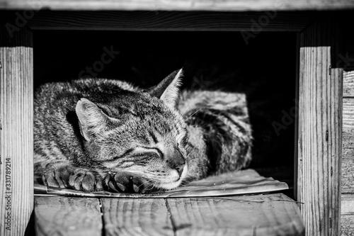 Chat tigré en train de dormir dans une niche Fototapeta