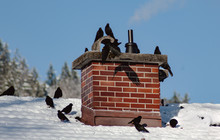Birds On The Roof