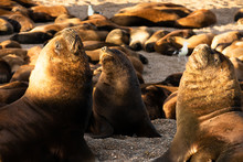 Sea Lion Family Sunbathing On ...