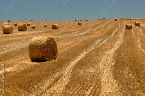 Leinwand Poster campos de cultivo