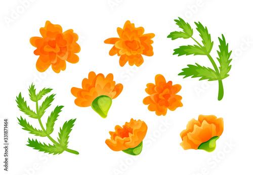 Fotomural Set of orange marigold blooms and green leaves