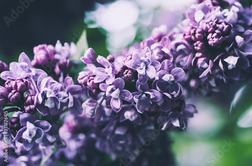 Spring lilac flowers Wallpaper Mural