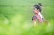 Leinwanddruck Bild - Beautiful asian woman Harvesting tea leaves in the morning, tea leaves in the field of tea,Tea Crop, China - East Asia, Picking - Harvesting, Camellia sinensis, Chinese Culture