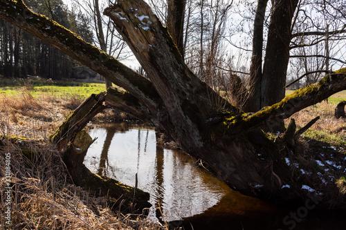 Fototapeta Wiosna na Podlasiu. Dolina Górnej Narwi. Piękne Podlasie, Polska obraz