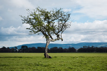 Pequeño árbol Solitar