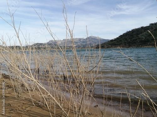Fototapeta Végétation en bord de lac