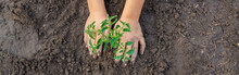 A Child In The Garden Plants A...