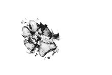 Dog Dirty Black Track Isolated On White Background. Dog Footprint