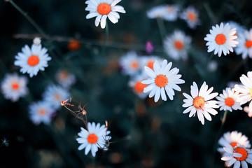 Wild flower. Little flowers on a green meadow.