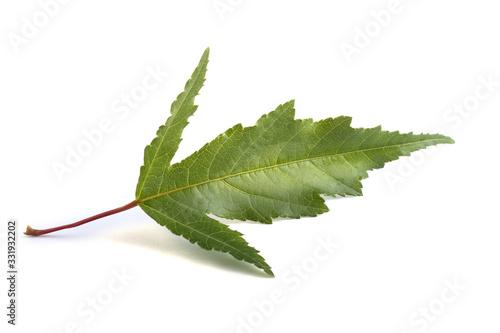 Photo Amur maple (acer ginnala) leaf