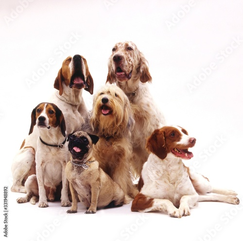 Beautiful shot of different dog breeds sitting on a white surface with a white b Canvas Print