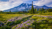 Mount Rainier National Park, W...