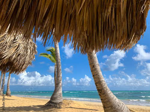 View of palm trunks on beach  with tiki roof in foreground