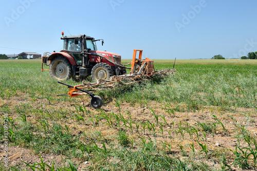 Fotografie, Obraz Désherbage mécanique champ maïs bio, écimeuse