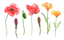 Watercolor Wildflowers Isolate...