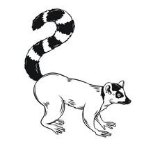 Lemur Icon Outline