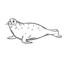 Sea Calf, Seal
