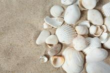 Beautiful Sea Shells On Sand